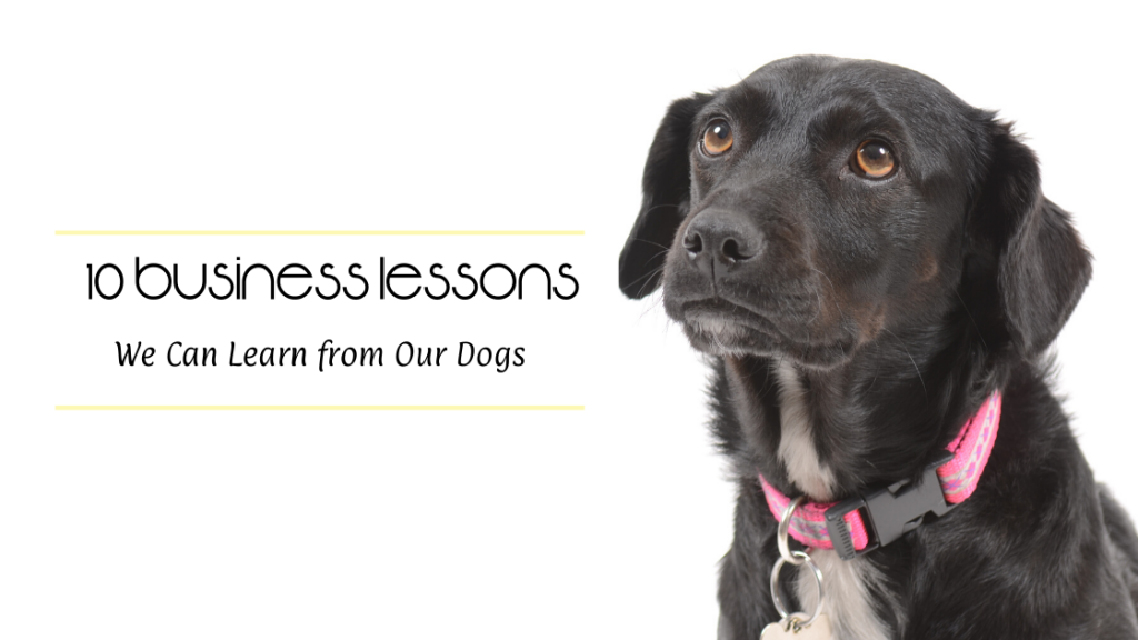10 Business Lessons We Can Learn from Our Dogs